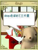 Dingo_6