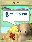 Dingo_7