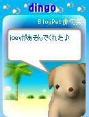 Joey_3